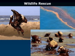 PowerPoint (Wildlife rescue)