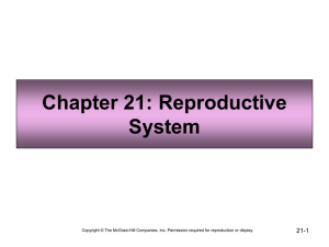 Chapter 21: Reproductive System