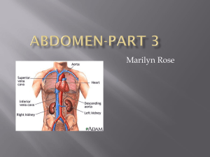 Abdomen-Part 3 - kylethornton.org