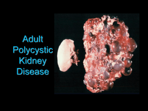 Adult Polycystic Kidney Disease