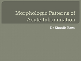 Morphologic Patterns of Acute Inflammation
