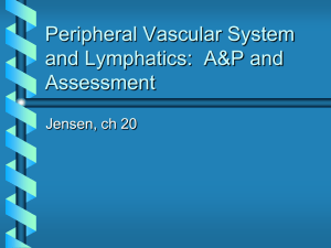 Peripheral Vascular A & P and Assessment