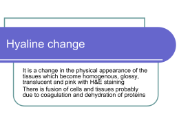 04-Hyaline change and Amyloidosis