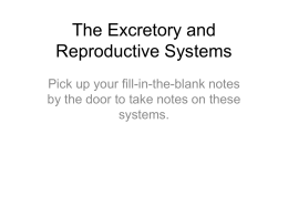 The Excretory and Reproductive Systems