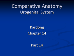 Comparative Anatomy Muscles & Digestive Sytem