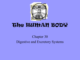 Chapter 30 - Digestive System