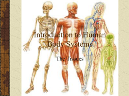 Introduction to Human Body Systems