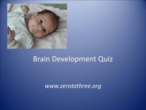 Brain Development Quiz