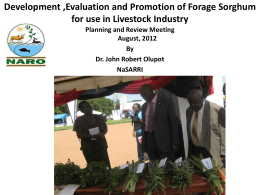 Development ,Evaluation and Promotion of Forage Sorghum for use