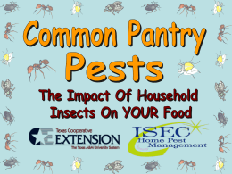 Pantry Pests – 14 slides