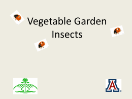 Vegetable Garden Insects