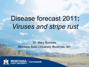 Disease Forecast 2011: Viruses and Stripe Rust