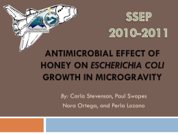 Antimicrobial Effect of Honey in E. coli growth