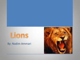 Lions (1) - UpWardBoundSummerScience
