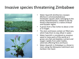 Invasive species threatening Zimbabwe...Download