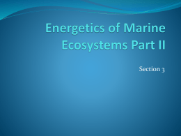 Energetics of Marine Ecosystems Part I