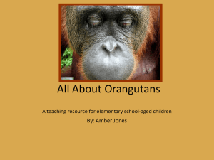All About Orangutans A teaching resource for elementary school