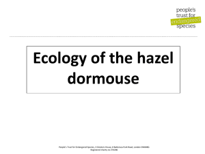 Ecology of the hazel dormouse ppt - Peoples Trust for Endangered