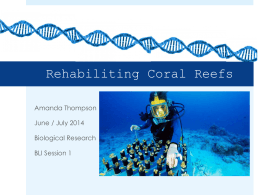Synthetic Biology*s Role in Saving Coral Reefs - BLI