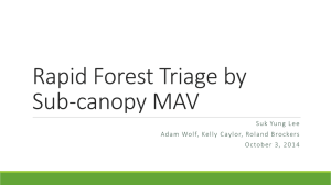 Rapid Forest Triage by Sub