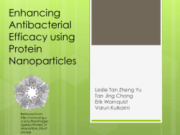 Enhancing Antibacterial Efficacy using Protein Nanoparticles