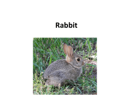 Rabbit - Online Veterinary Anatomy Museum
