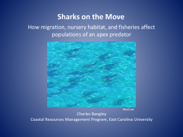 Sharks on the Move Powerpoint