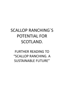 SCALLOP RANCHING`S POTENTIAL FOR SCOTLAND. - Scot