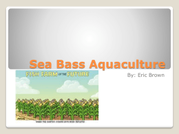 Sea Bass Aquaculture