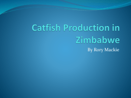 CAT fish production
