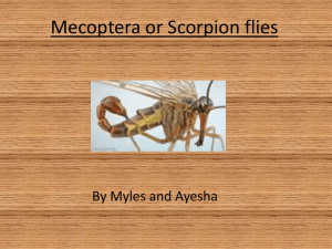 Mecoptera or Scorpion flies