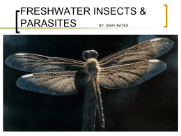 freshwater insects & parasites by