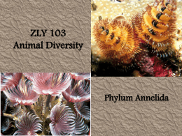 ZLY 103 Phylum Annelida