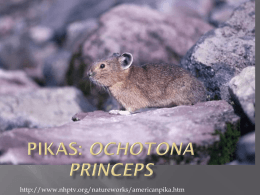 pika creature feature1 - Colorado Springs School District 11