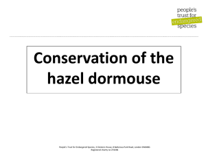 Conservation of hazel dormice ppt - Peoples Trust for Endangered