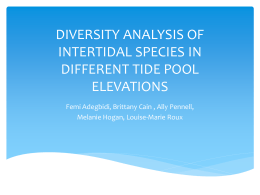 diversity analysis of intertidal species in different tide pool elevations