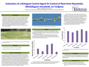 Evaluation of a Biological Control Agent for Control of Root
