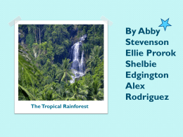 The Tropical Rainforest (Abby, Shelbie, Alex, Ellie)