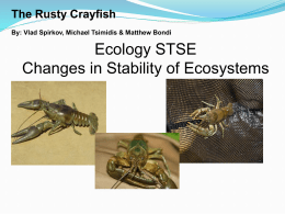 The Rusty Crayfish By