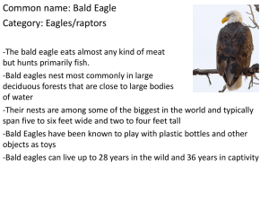 Bald Eagle - Sage Middle School