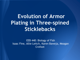 Evolution of Armor Plating in Three-spined Sticklebacks