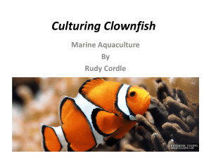The Clownfish RUdy Cordle