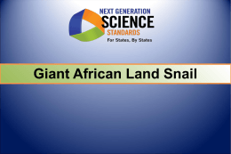 Sci Math Task Giant African Land Snail