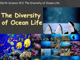 Earth Science 15.2 The Diversity of Ocean Life