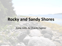 Rocky and Sandy Shores