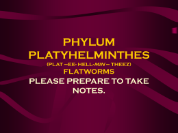 PHYLUM PLATYHELMINTHES (PLAT –EE- HELL