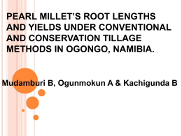 pearl millet`s root lengths and yields under