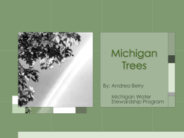 Michigan Trees - Michigan Water Stewardship Program