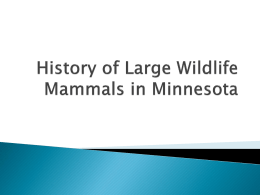 History of Large Wildlife Mammals in Minnesota