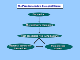 The Pseudomonads in Biological Control